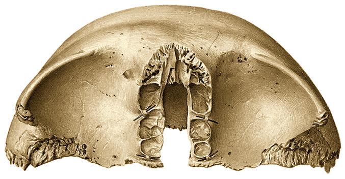 Juegos de Ciencias | Juego de Hueso frontal (cara inferior) | Cerebriti