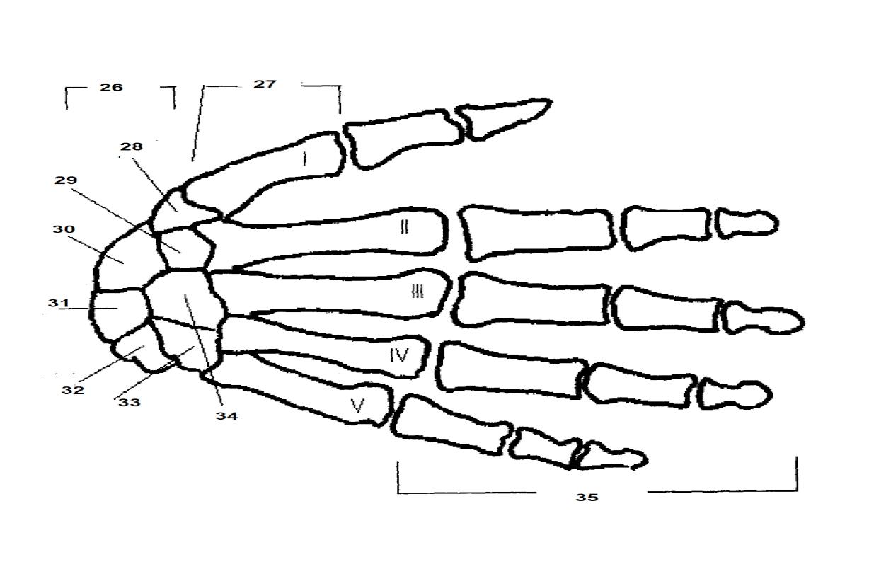 Juegos de Ciencias | Juego de Huesos mano (TAFAD) | Cerebriti