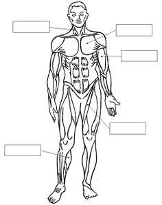 Juegos De Ciencias Juego De Sistema Muscular Cerebriti