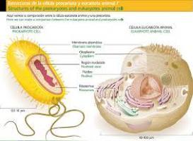 Juegos de ciencias juego de c lula procariota y eucariota cerebriti - Estructuras libros vivos ...