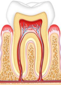 Juegos de Ciencias   Juego de Partes del diente y tejidos