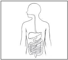 Juegos De Ciencias Juego De Sistema Digestivo El Viaje De La