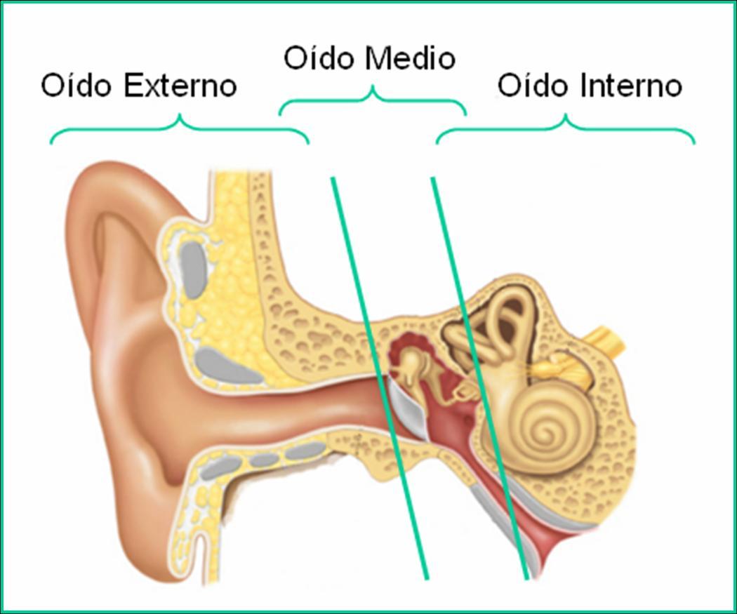Juegos de Ciencias | Juego de Partes del oído: identifica | Cerebriti