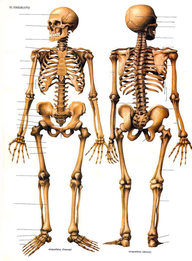 Juegos de Ciencias | Juego de Huesos del cuerpo humano #5 | Cerebriti