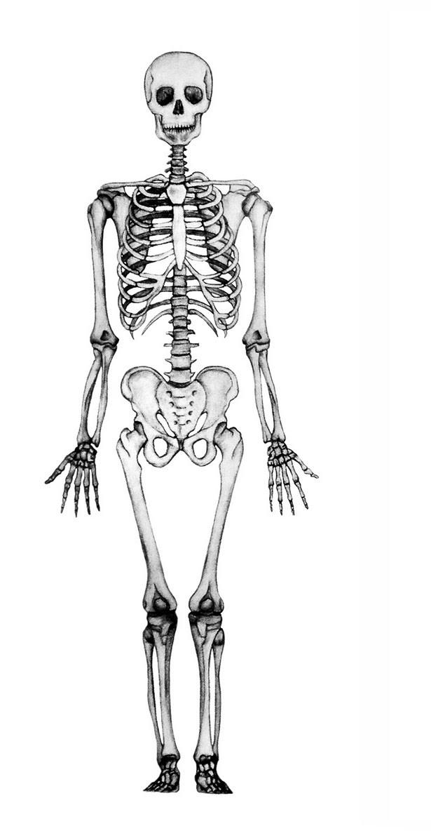 Juegos de Ciencias | Juego de Huesos del cuerpo humano #1 | Cerebriti